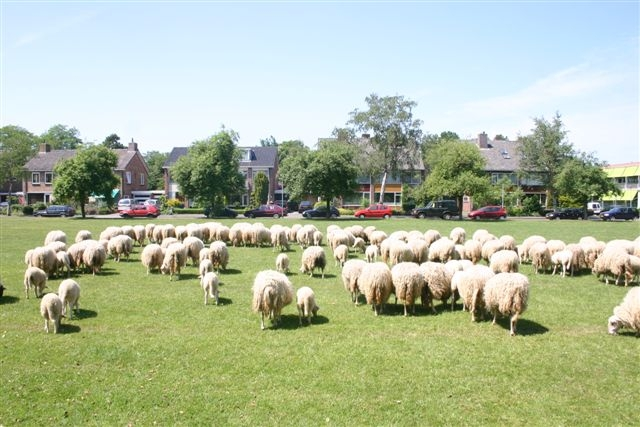 Waar blijven de schapen?